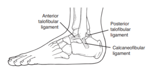 Side view illustration of the foot, showing the ligaments on the outside of the ankle that frequently get injured with a sprain.